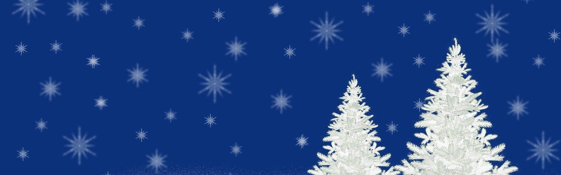 Header Bild 15 Weihnachtsbäume zu gewinnen!