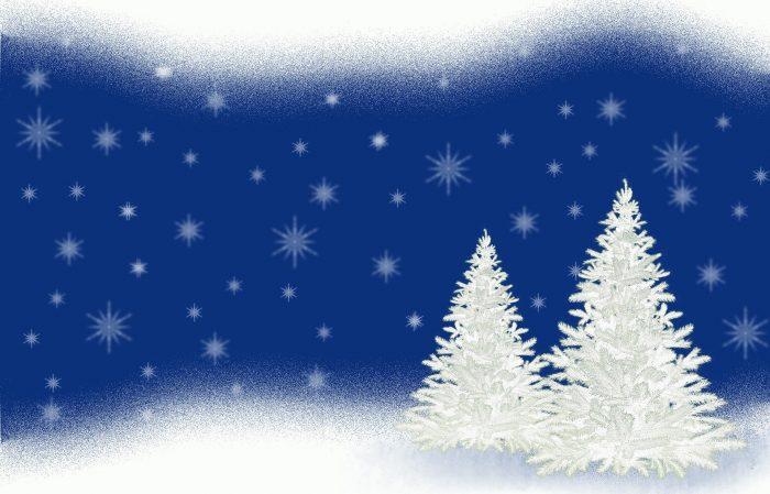 15 Weihnachtsbäume zu gewinnen!